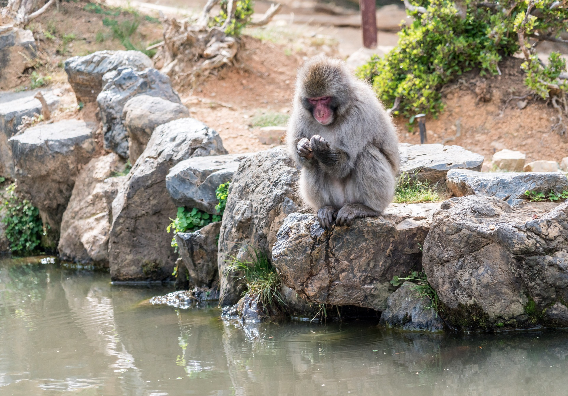Japan Affenpark